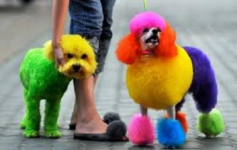 This: Colorful poodles :D