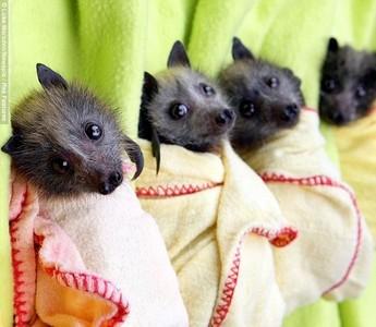 :3 bats <3