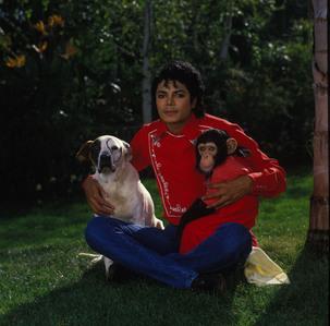 A chimp and a dog..and i 爱情 to have a snake!