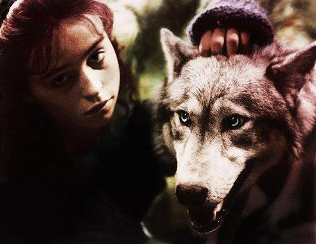 Because I amor this movie (The Company of Wolves) and the characters in the picture, both as individual characters and a couple (he's a werewolf, okay). Also, because I always wanted to be a werewolf, and I have a love/hate relationship with Rosaleen (the girl in the pic), because not only does she get the unbelievably badass and sexy Huntsman as a mate, she becomes a werewolf, herself! So she gets pretty much everything I want, damn her. But I amor her, so it's all good. :) P.S. I've had this icono ever since I joined Fanpop, almost three years ago. I've never changed it, and I never will!