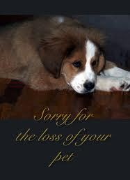 Image result for sorry for your loss dog