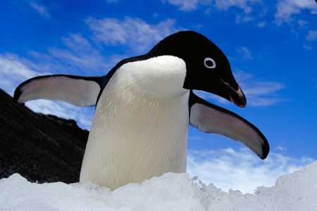 I Cinta PENGUINS WITH ALL OF MY HEART!!! There are claims that penguins are as intelligent as humans, if not lebih so. Penguins are considered among the smartest Haiwan on the planet.
