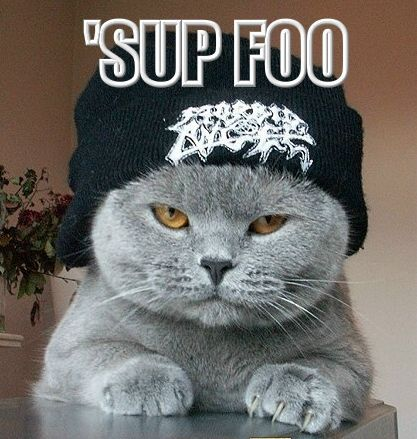 A really funny pic of a gangsta cat :3 This would be me! <3