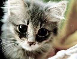 Mine....si cute!