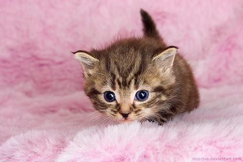 fuzzy backround + Kitten = CUTE!!!!!!