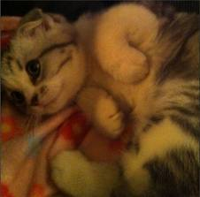 Taylor Swift's kitty, Meredith(: