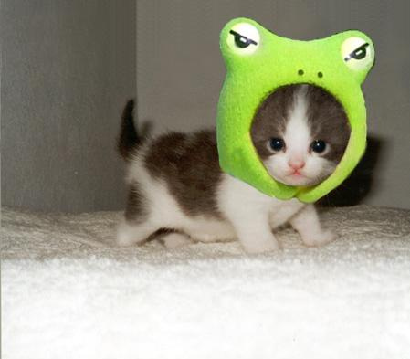 CUTE!! here's mine: