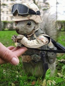"I thought this was reallt cute. Igot it in an E-Mail that sagte ""what do soilders do when they get bored?"""