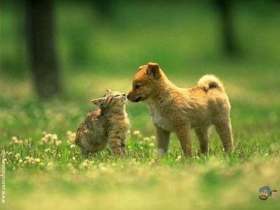 Puppy+kitten=absolute cuteness! :)