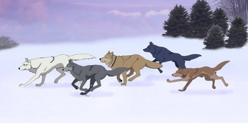 i would cinta to fight along side with kiba and the gain as a serigala just like them because there a pack and they would never give up to save anda when your in trouble.