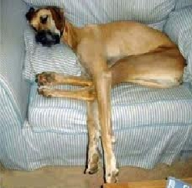 I'm not sure if this counts but this dog in this position just creeps me out.