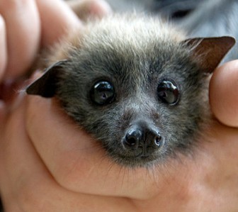 This little bat :D <3