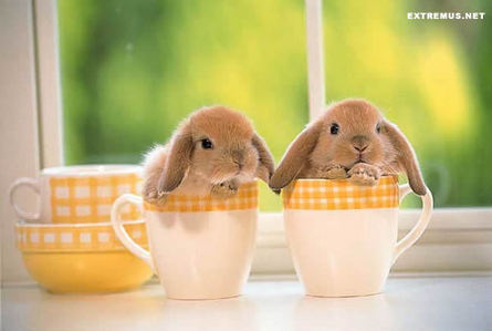 mabye Ты need to get a new computer. или just download Google chrome, go to Fanpop and log on. and plz enjoy this cute pic with 2 bunny inside a cup! :)