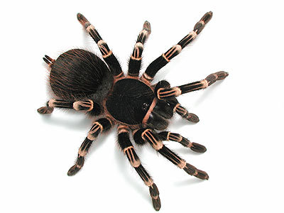 Spiders, Dark, Heights, & ClausterPhobic