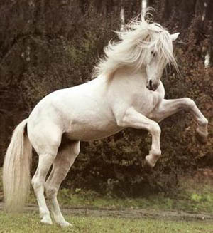 nope, because i don't like ponies :P But i do like horses, real big horses!