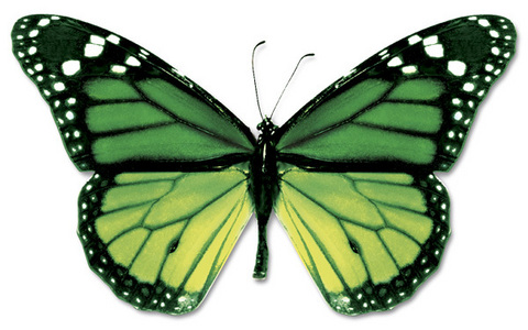 like a green Monarch mariposa