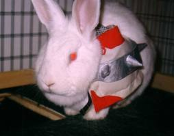 It's not a person but I think It's really cute. This bunny is cosplaying as Sesshomaru from InuYasha, and Sesshomaru is my 最喜爱的 日本动漫 character of all times! >.<