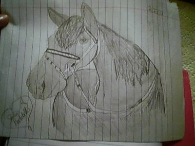 i drew this pic of a horse but i would love to have a mustang