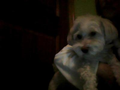 I got my cutie dog Dudels :3 He is 5/6 years old