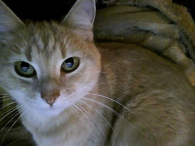I have two Кошки Sassy and Molly. This is Molly: