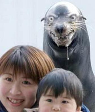 rabid zeehond, seal attack?