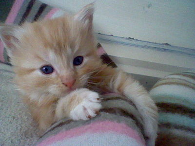 this is not the cutest animal iv ever seen cos i think there all even in cuteness this is my kitten though :)