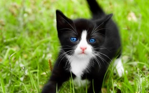 Another cat. :) I postato this in the Gatti thread so...yeah.
