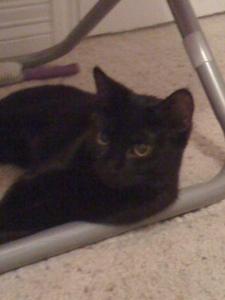 My black cat, Bella <3