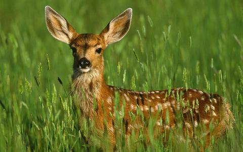 Why yes deer.