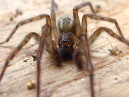 Spiders...*le shiver*