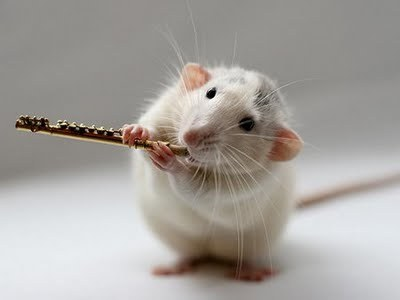 I play the Flute, and I am learning how to play 'The Magician' 'Zooveniers' and 'Thriller'
