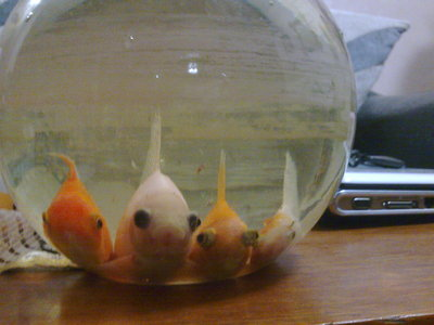 My fishies Aren't they cute ^.^ ?
