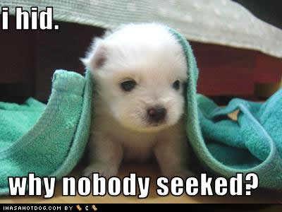 i Amore Cani so cute