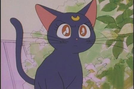 Luna from Sailor Moon