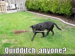 Play Quidditch!