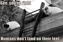 * P h w e e e e e e * *THUD* bad kitty! Ooh lookit the pretty stars *passout*