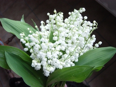 lily of the valley because of its sweet, fresh scent