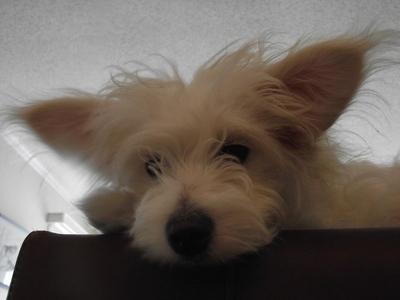 a 강아지 is a dog .:derp:. And aye, i got meself a dog~