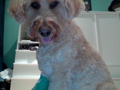 My doggy :3