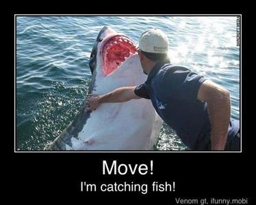 annoying shark...