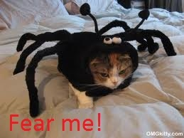 Fear the awesome might of cat-spider!!!!!