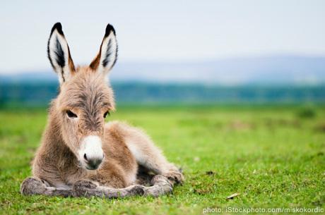 Horses, donkeys, zebras, equids in general.