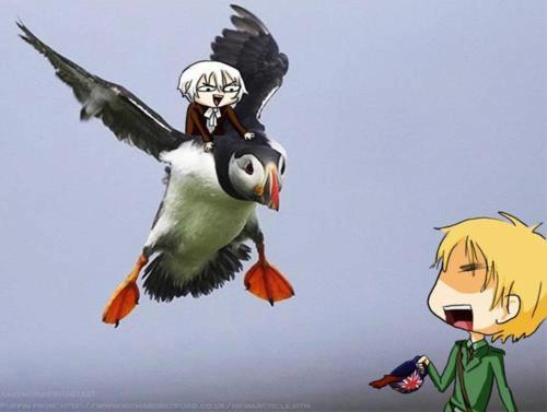 I'd ride Mr. Puffin~! >:D
