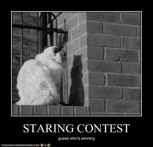 Here:: Staring contest! xP