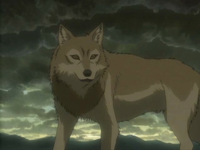 Highe from Wolf's Rain
