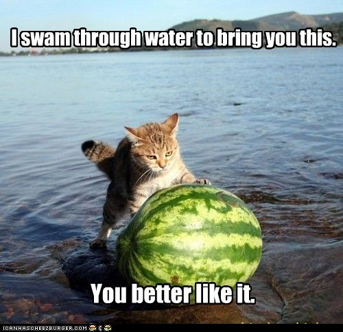 It's a cat with a watermelon, tikiti maji what zaidi can wewe want?