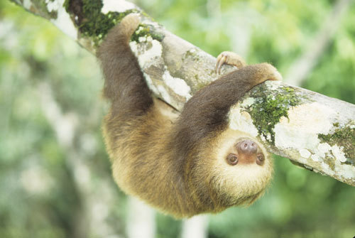 besides my constant main obsessionS.... uh i guess right now im pretty into sloths... not sure why. but its a phase im going out of, theyre not like my Favorit Tiere ever (that place will always belong to the alpacas <333)
