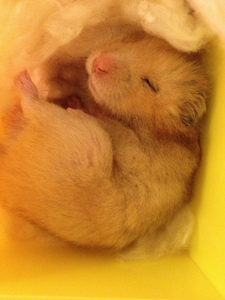 Other than Switchfoot? hmmm.... umm....... e_e My hamster :3