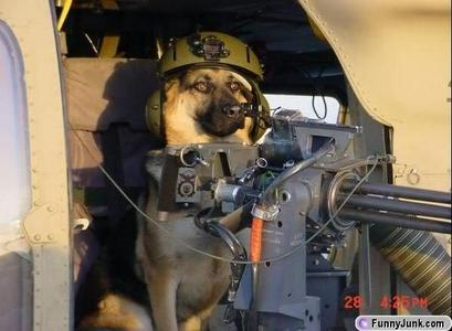 """I would say """"send in the hounds!"""""""