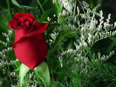 Rose! <3